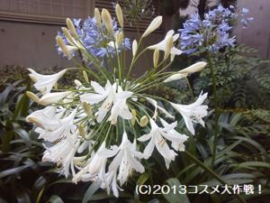 ロイヤル・ベービー 誕生を アイス・ティで お祝い 横浜・新山下公園